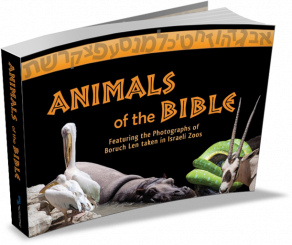 Animals-of-Tanach-3DCover