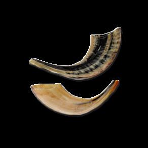 shofars1