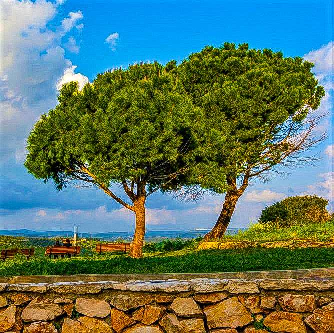 two-trees