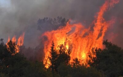 Rushing to Replant Trees After Fire in Bat Ayin