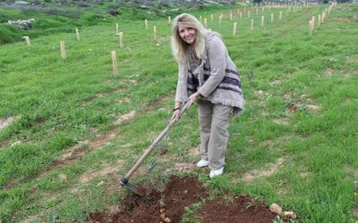 Israel365 Races to Plant Trees Before the Sabbatical Year