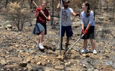 Daughters of Israel Begin Replanting Bat Ayin's Trees